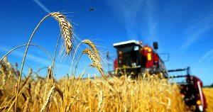 Первый рекорд жатвы 2013 на Кубани уже поставлен