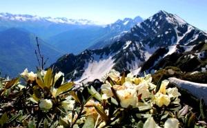 50 тысяч туристов посетили горы Сочи этим летом