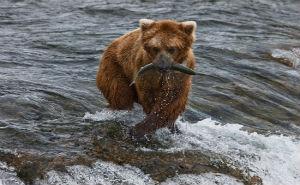 Объем вылова рыбы в 2013 году в Краснодарском крае вырос на 38%.