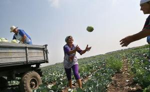 Сельхозпроизводителей, которые будут использовать зарубежную рабочую силу, лишат региональных субсидий