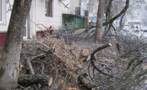 Аграрные хозяйства получат щепу из упавших деревьев