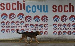 Перед Олимпиадой власти Сочи очищают город от бездомных собак