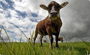 В 2013 году на Кубани снизилось производство яиц и поголовье скота