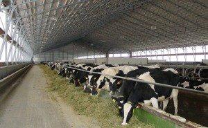 PepsiCo продала четыре кубанские фермы