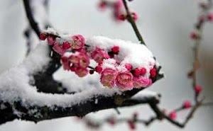 С сегодняшнего дня на Кубань возвращаются заморозки