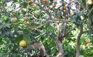 Сочинскому «Дереву Дружбы» исполняется 80 лет