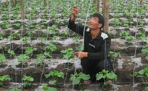 Сельскому хозяйству Кубани китайцы наносят непоправимый ущерб