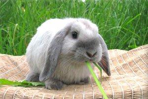 Любые товары для кроликов на Юг-market