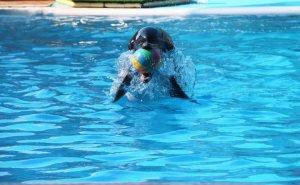В парке Краснодара откроют дельфинарий
