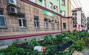 Власти Краснодара объяснили причину повальной вырубки деревьев на центральной улице города