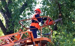 Жители Краснодара по-прежнему против вырубки деревьев