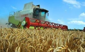 На Кубани в 2014 году будет собран рекордный урожай пшеницы