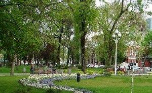 В Краснодаре началась выдача паспортов деревьям