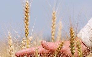 Александр Ткачёв: Урожай 2014 года войдёт в историю на ближайшие 10 лет