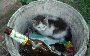 Проблема с бездомными животными в Сочи зашла в тупик