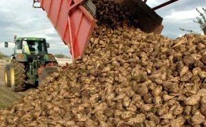 В 2015 году аграрии Кубани хотят расширить площадь посева сахарной свеклы