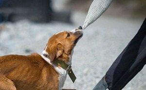 Для 150 бродячих сочинских собак приют