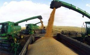 Аграрии Кубани собрали рекордный урожай пшеницы — свыше 9 млн тонн зерна