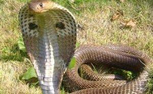 Фотосессия на пляже со змеёй закончилась реанимацией