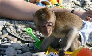 Изъятых у фотографов экзотических животных, по суду приходится возвращать хозяевам