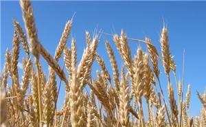 В Краснодаре будет разработана программа развития аграрного сектора