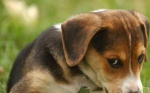 В Краснодаре состоялась акция в День защиты бездомных животных