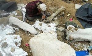 Недалеко от Армавира найден скелет древнего бегемота