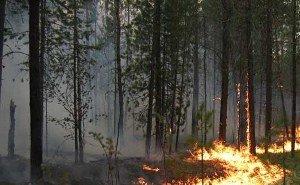 В Краснодарском крае по-прежнему выгорают реликтовые леса