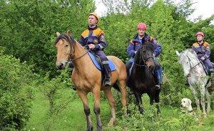 Спасателям в горах Сочи помогают лошади