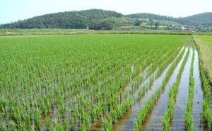 Проблемы рисоводства Кубани обсудили в Краснодаре