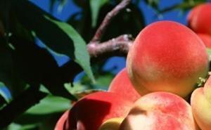 600 млн рублей выделяют на поддержку садоводства и овощеводства Кубани