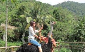 На Кубани аграрный туризм становится всё более популярным