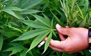 В Краснодаре обсудили наркоситуацию на Кубани