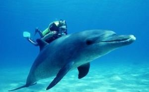 С дельфинами в Сочи можно будет поплавать в новых аквалангах