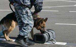 На вокзале в Сочи служебная собака выявила крупного наркодилера