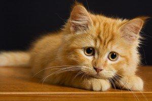 У кошки должен быть собственный домик