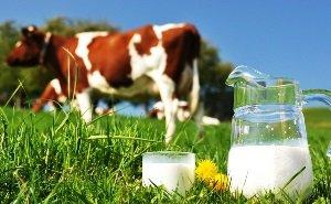 Краснодарский край по-прежнему остро испытывает дефицит молока
