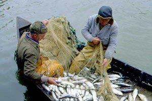 Дефицит рыбы в Краснодарском крае