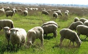 Прирост альтернативного животноводства в Краснодарском крае составил более 76%