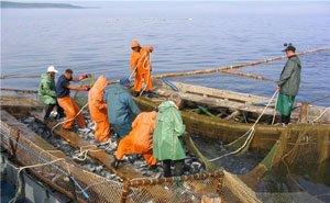 Развитию рыбопромышленной отрасли Кубани мешают проблемы с переработкой