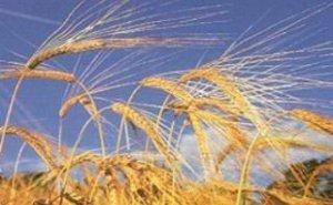 Проблемы семеноводства Кубани обсуждали на этой неделе в Москве