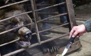 Больных сочинских медведей, страдающих алкогольной зависимостью, готовы приютить в заповеднике Румынии