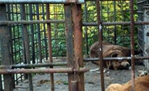 Судьба медведей-горемык Сочи по-прежнему под большим вопросом