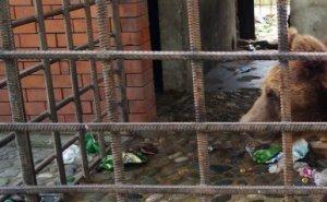 Мишки из ресторана Сочи находятся на реабилитации в Подмосковье