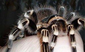 Опасны ли обнаруженные в Сочи новые виды пауков, покажут исследования