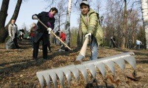 В Краснодаре 300 тыс человек вышли на субботники