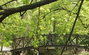На Кубани часть Приморско-Ахтарского заказника отдают под элитные охотничьи угодья