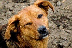 В Краснодаре позаботятся о бездомных животных
