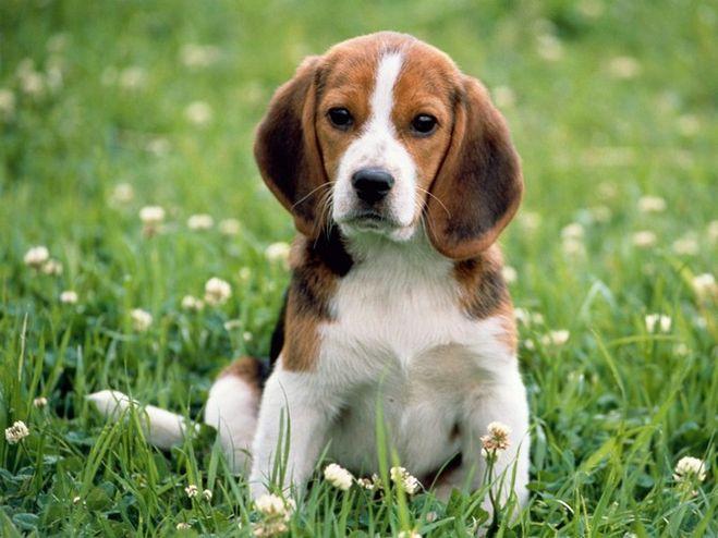 Продажа собак в Краснодаре: породы щенков с учетом запросов покупателей
