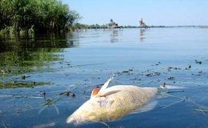 В Карасунских озёрах массово мрёт рыба